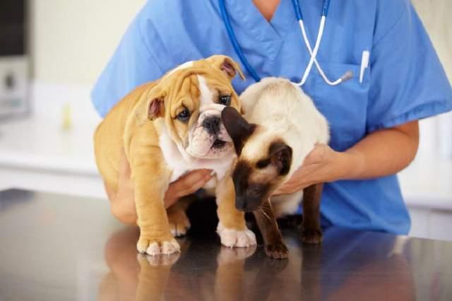 Правильне лікування тварин
