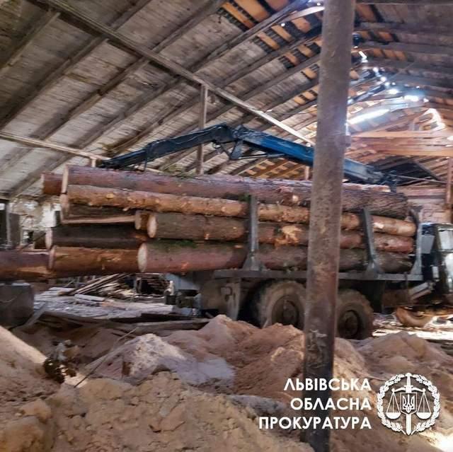 Вкрали дерева на понад 2,6 мільйона гривень: слідчі повідомили про підозру
