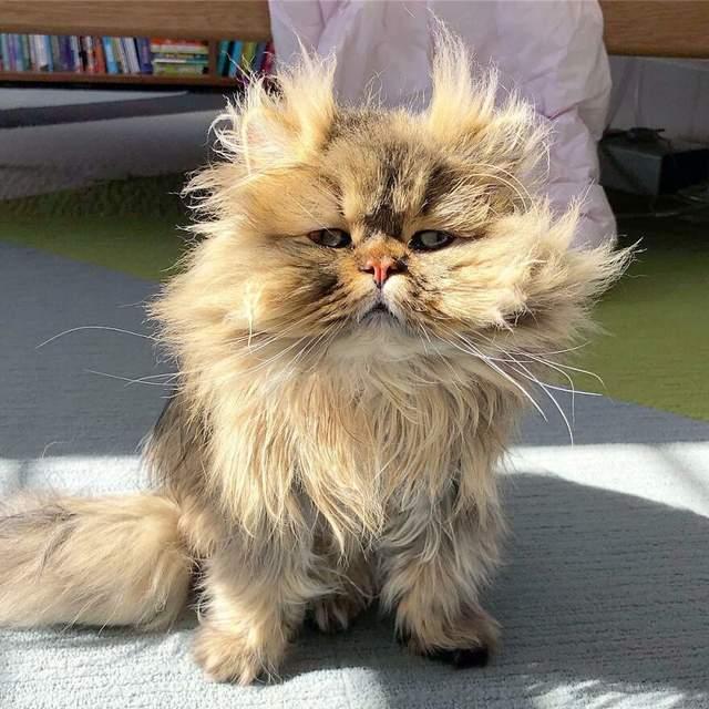 Кіт завжди виглядає так, ніби щойно прокинувся