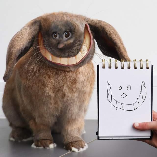 Веселий кролик