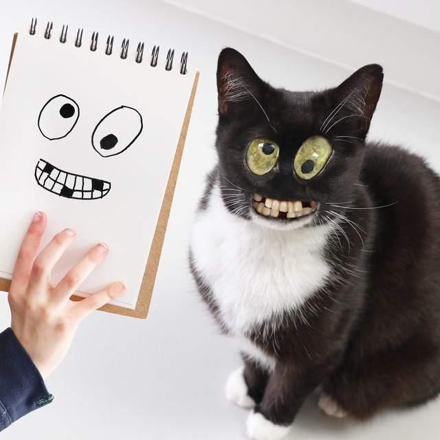 Веселе кошеня