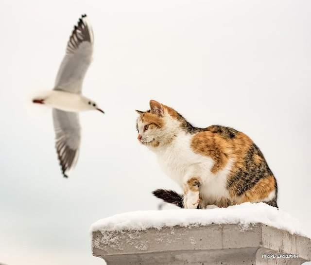 Триколірна кішка живе поблизу пляжу