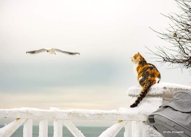 Фото Ігор Єрошкін