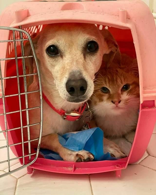 Собака допомагає перевозити малюків