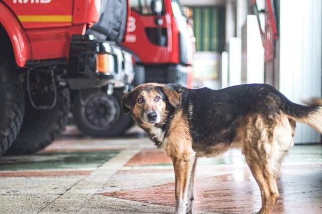 Главная задача пса – встречать и провожать спасателей