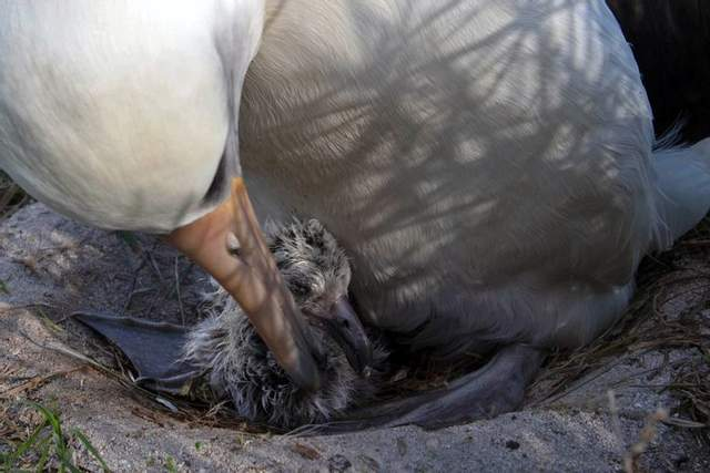 Самая старая птица со своим птенцом