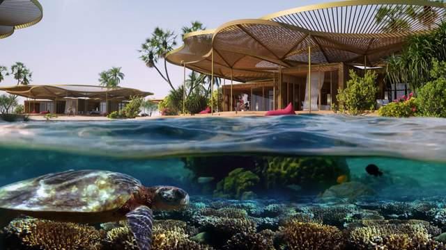 Чарівний водний світ Червого моря  / Фото New Atlas