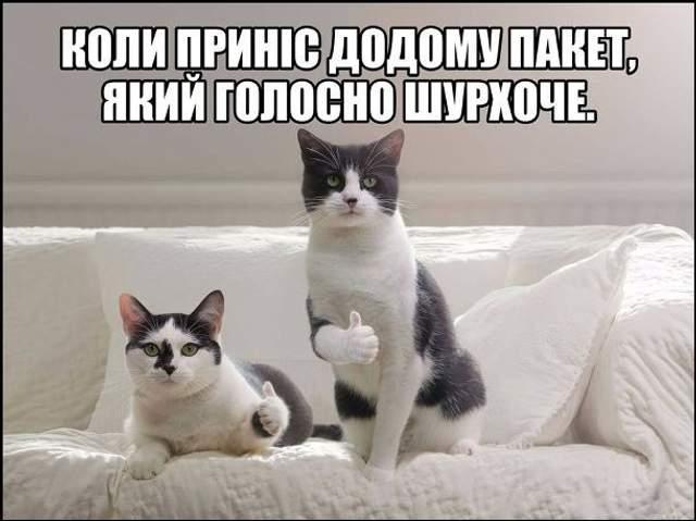 День кота меми