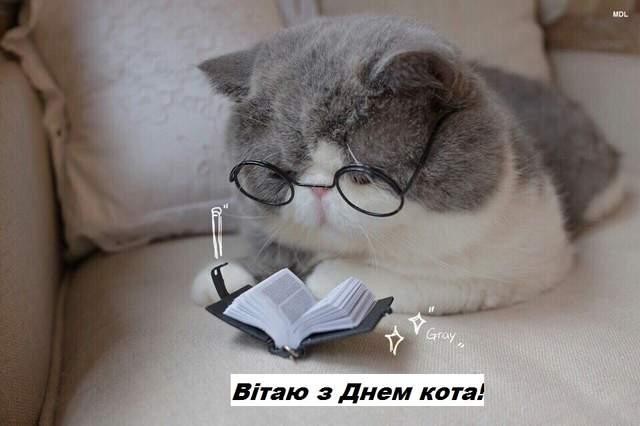 День кота 17 лютого