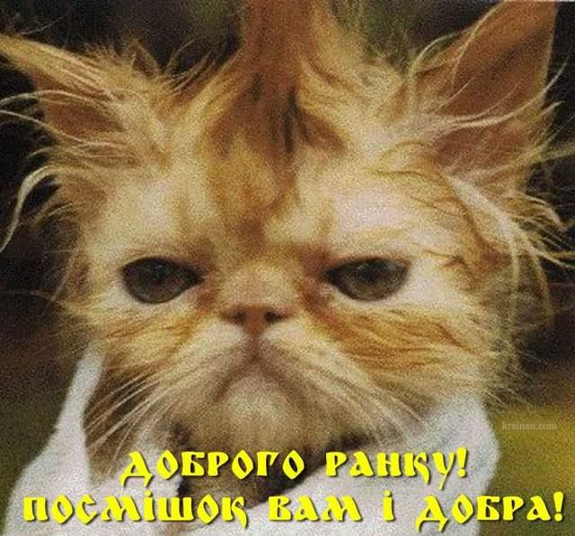День кота смішні картинки