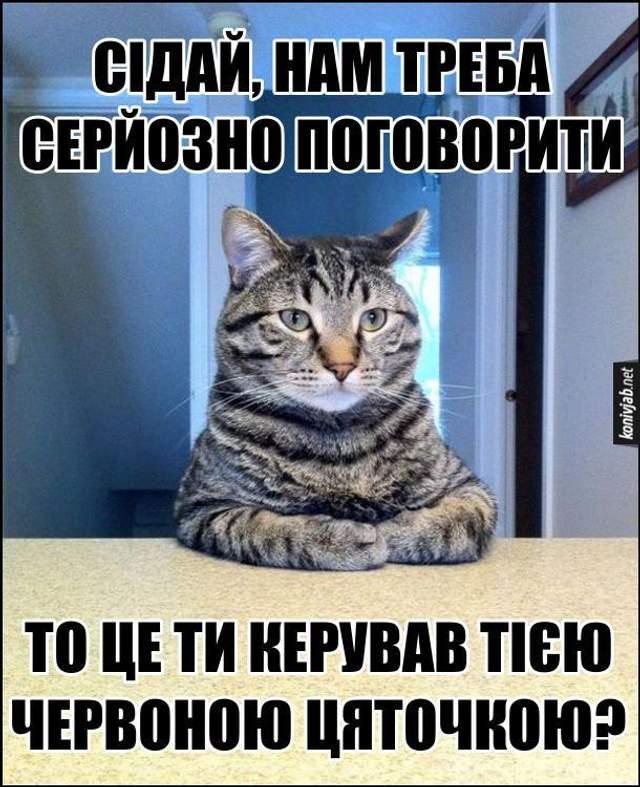День кота смішні картинки українською