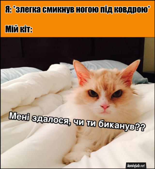 День кота прикольні картинки