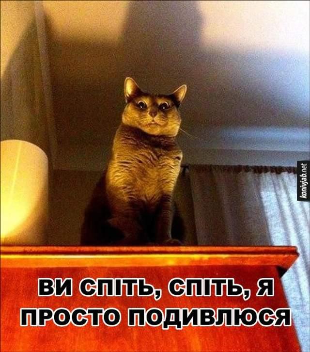 День кота у Європі картинки