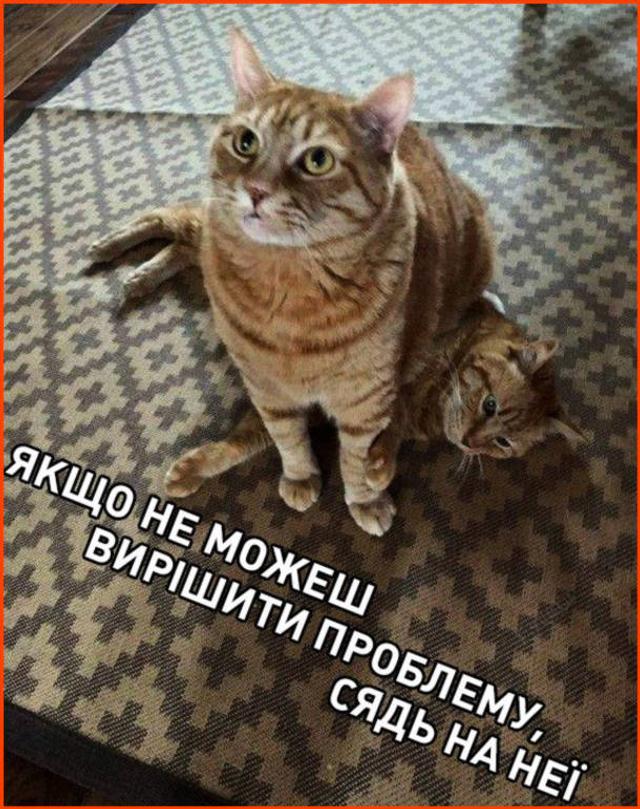 Смішні картинки на День кота