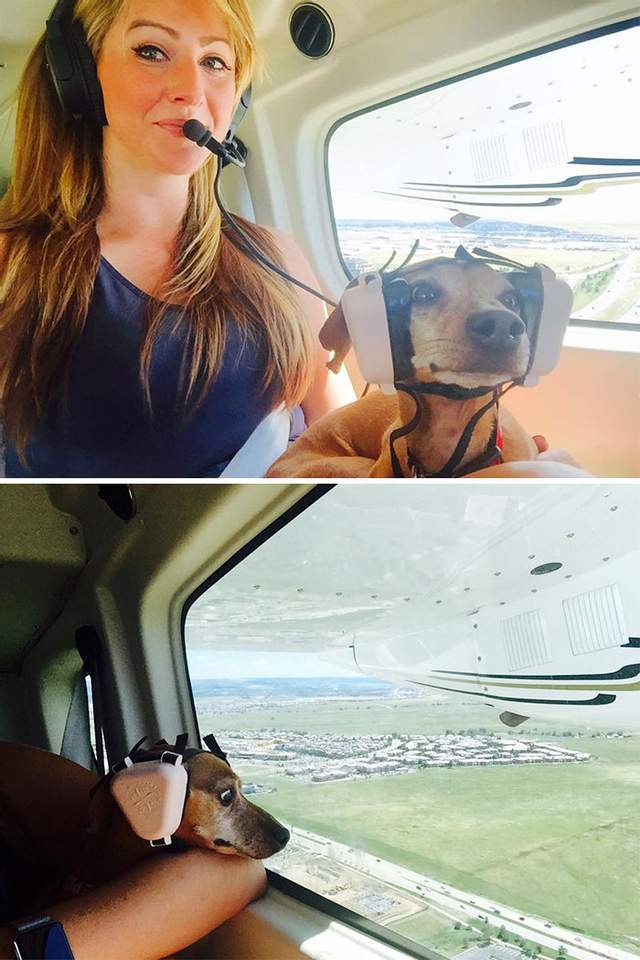 Собака в навушниках виглядає дуже мило