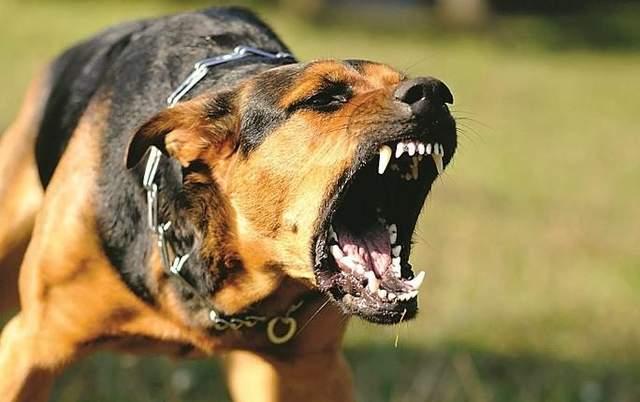 Это открытие можно использовать для реабилитации собак