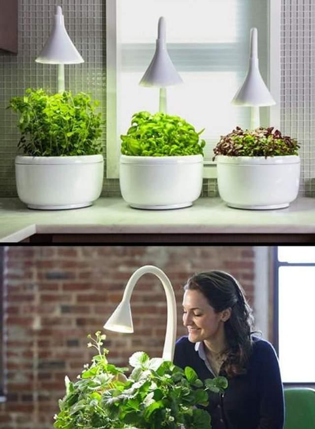 Домашній сад розумний