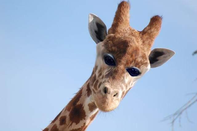 Як  виглядали б тварини,  якби очі у них були спереду