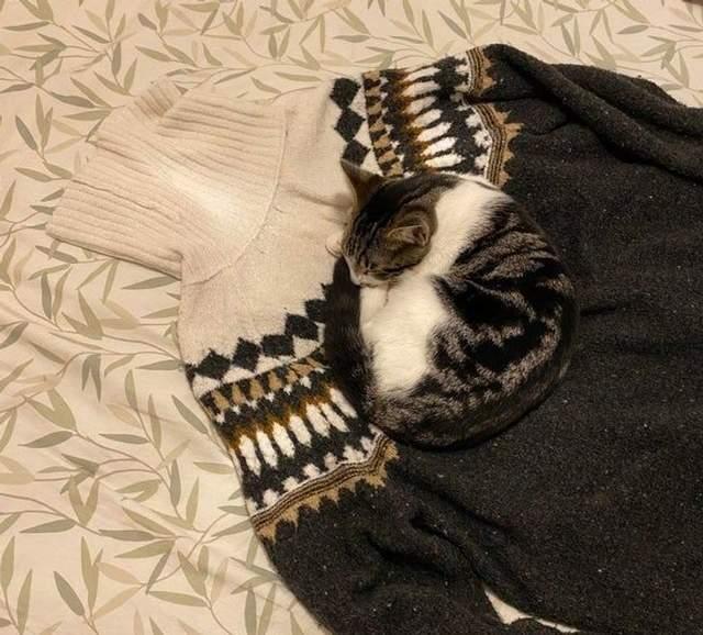 Кіт і джемпер