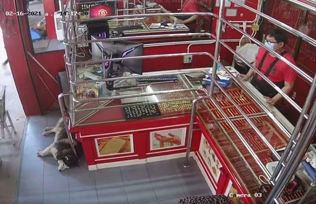 Лакі спить біля прилавка в магазині