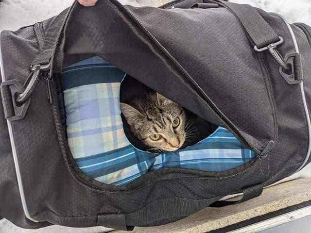 Полиция услышала из сумки мурлыканье