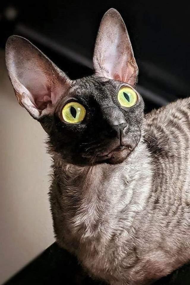 екзорцист назвав кота, який прославився в соцмережах, демоном