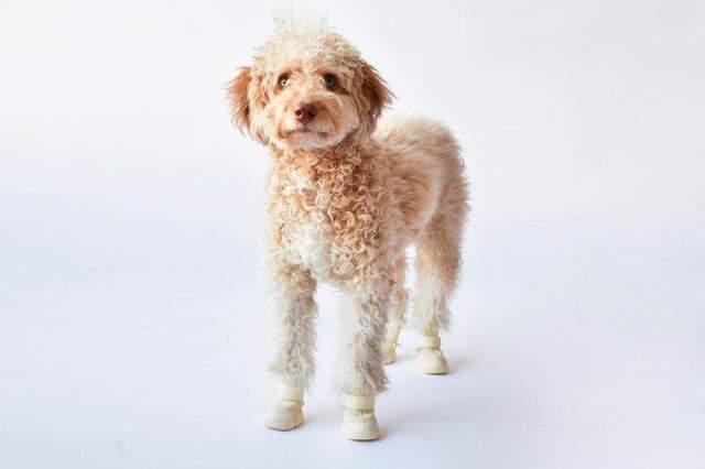 У продаж надійшли перші дизайнерські кросівки для собак