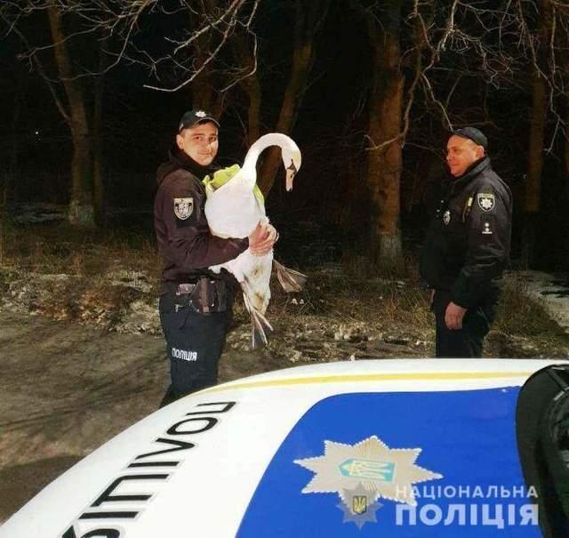 Далекобійник вчасно помітив лебедя і загальмував