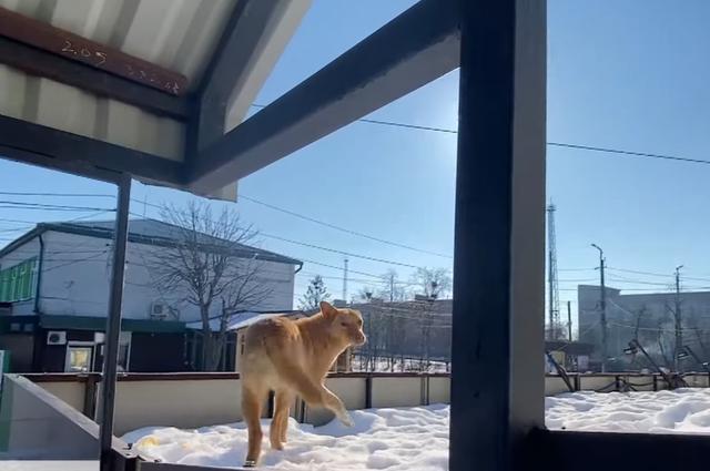 Собаку неодноразово знімали з даху місцеві мешканці й рятувальники
