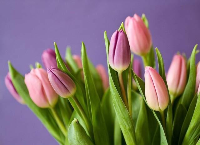 Привітання з 8 березня колезі у прозі