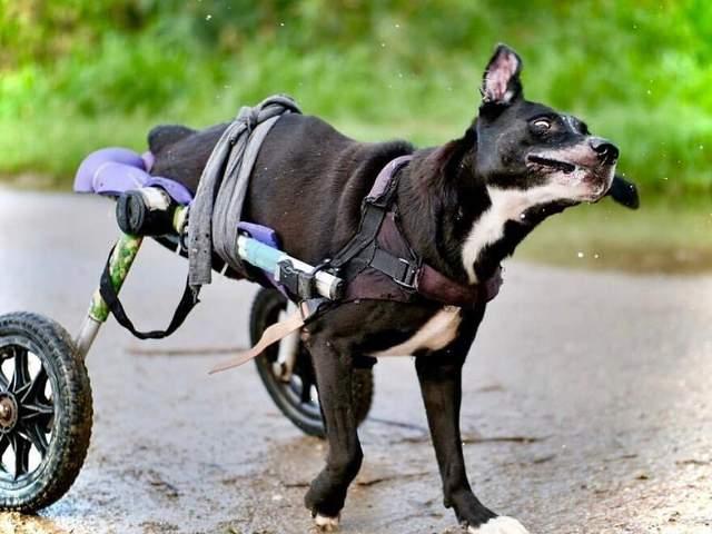 Собаки з інвалідністю радіють життю