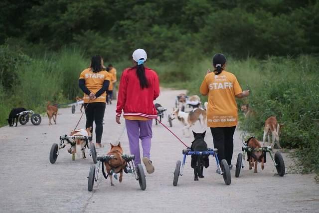 Волонтери допомагають доглядати собак