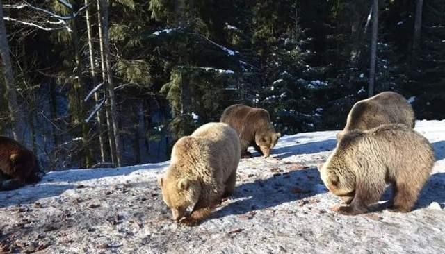 От спячки уже проснулись 5 медведей