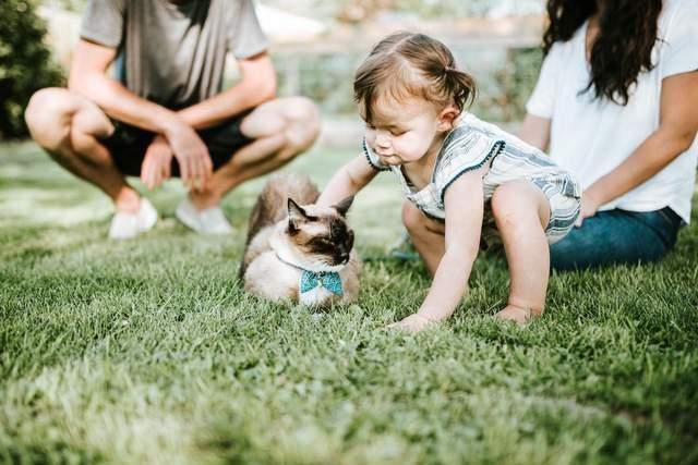 Діти, які ростуть з кішками, рідше страждають на астму та алергії