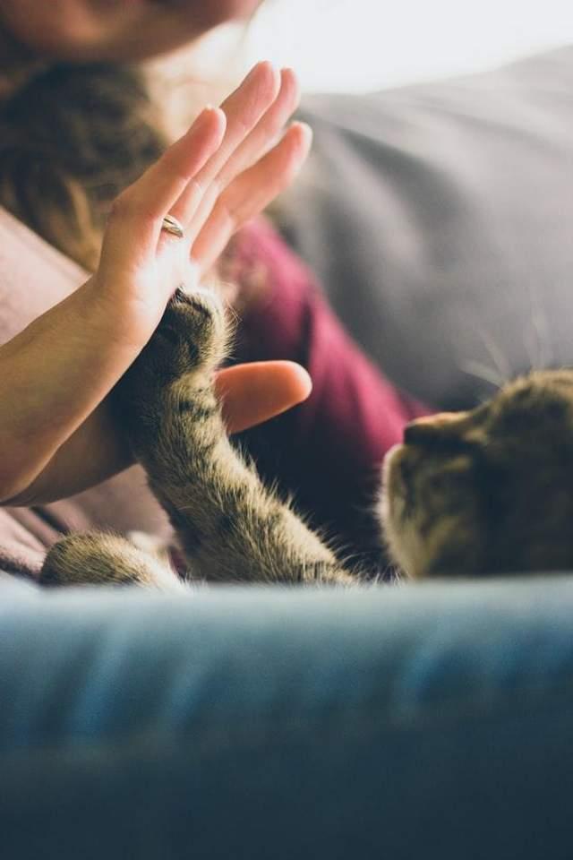 Кішки допомагають людям не почуватися самотніми
