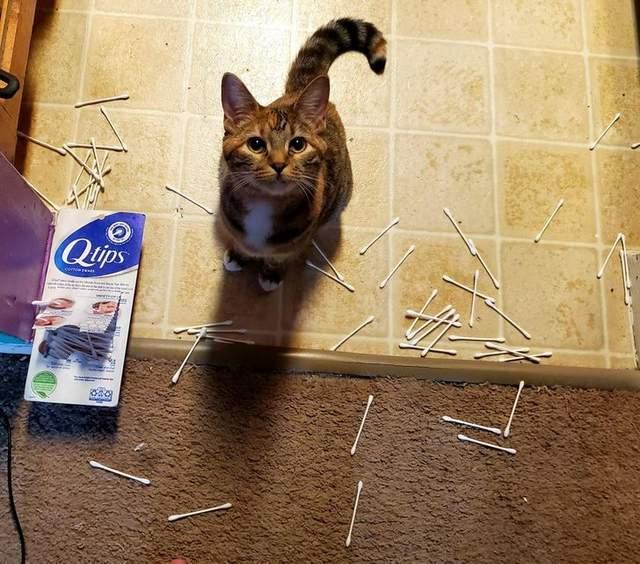 Кішка тут зовсім ні до чого