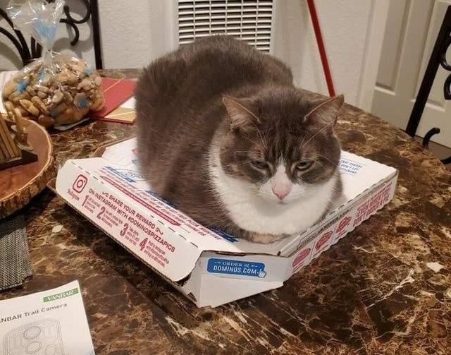 Кішка, що вважає себе набагато апетитнішою за якусь там піцу