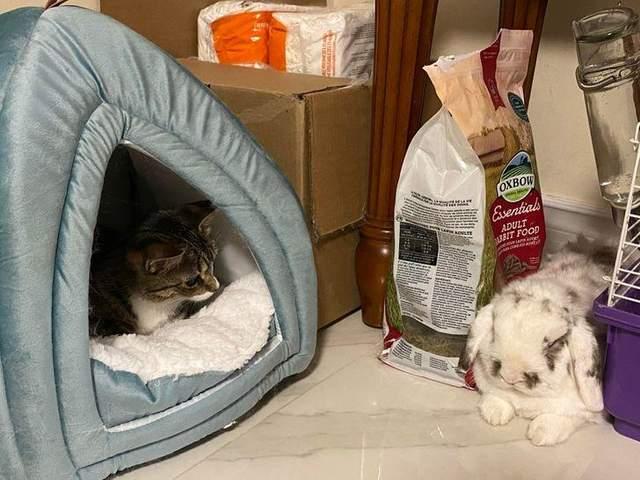 Кішка, яка не соромиться забирати чужу нерухомість