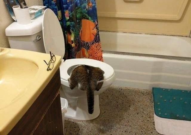 Цей кіт розуміється у свіжій водичці