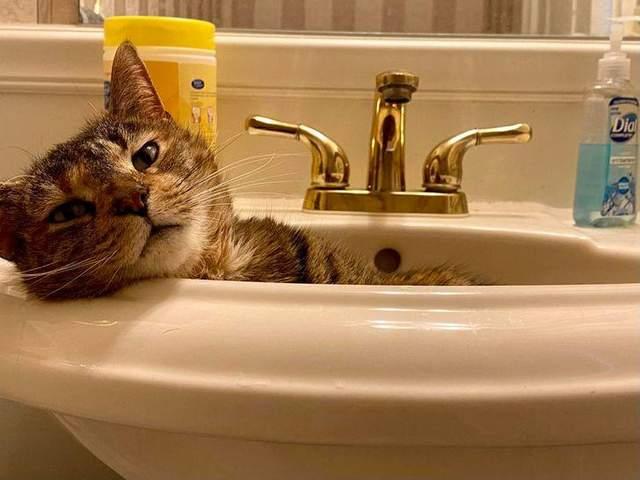 Кіт, якому зручно в мийці
