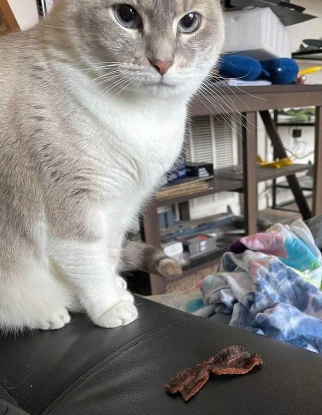 Кішка, яка вважає, що хазяйка їсть якусь гидоту