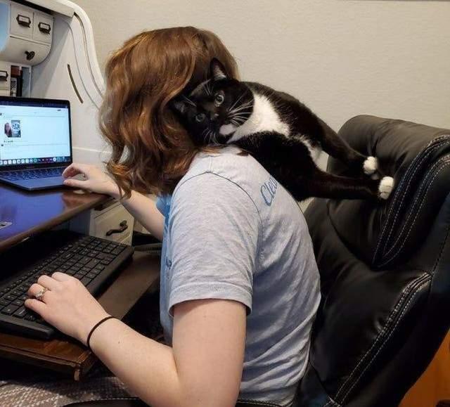 Кіт, який долає закони фізики й хорошого тону