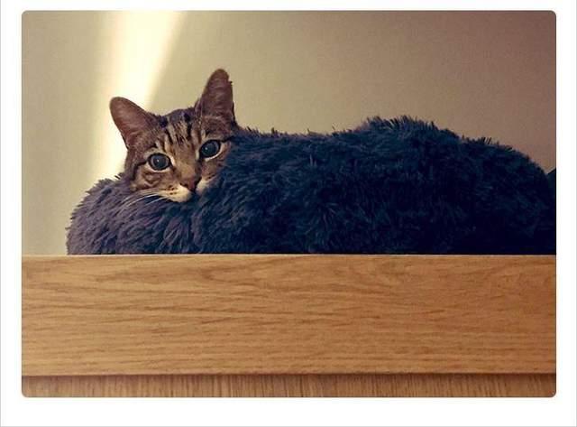 Кішка, яка ігнорувала нові меблі, поки їх не закинули на шафу