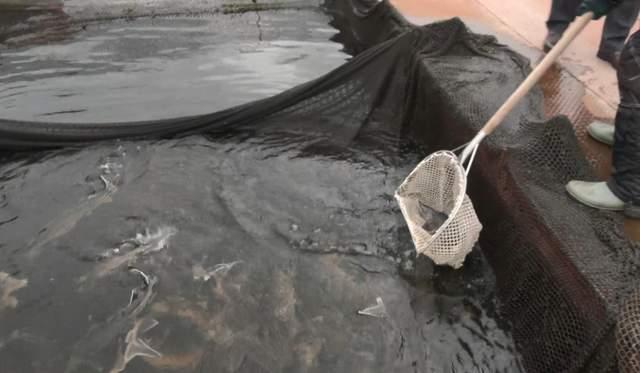 Розведення риб