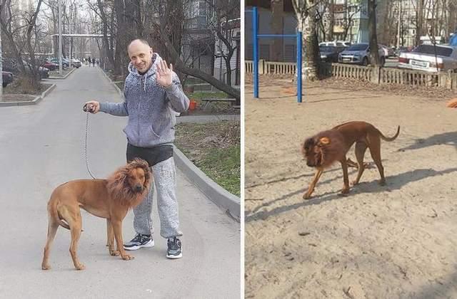 Собака с гривой льва в Днепре
