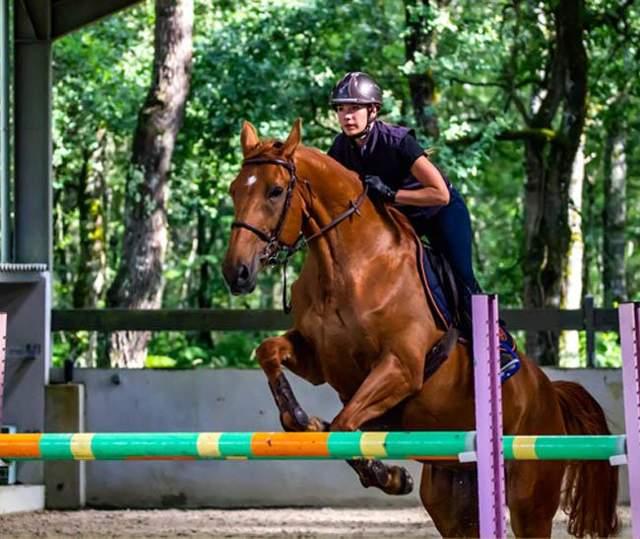 Ривок середнього коня