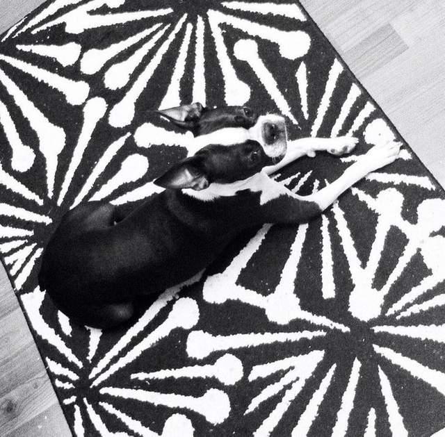 Собака на коврику