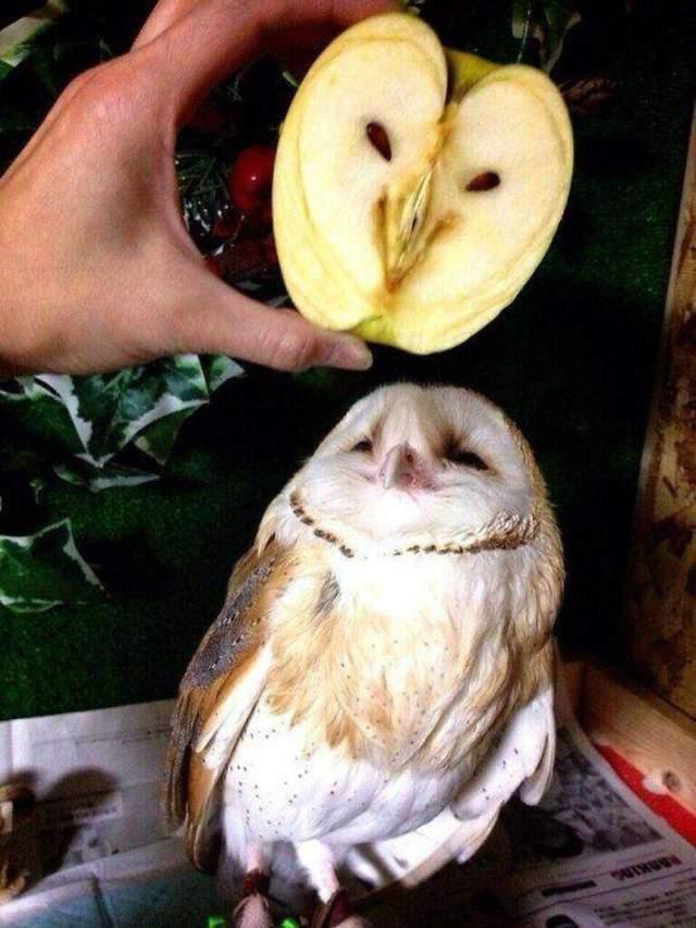 Сова та яблуко