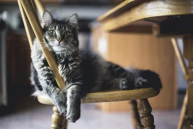 Кіт на стільці