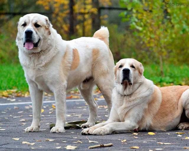 Даже в частном доме большой собаке может быть недостаточно пространства